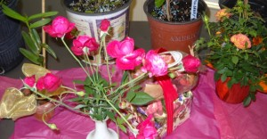 Samples of Old Garden Roses were on display during the meeting of the Orlando Area Historical Rose Society.