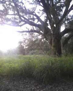 As the sun sets over this open field off Babb Road in Kissimmee, it was rumored for a long time to have been haunted. (Photo by Alpha Male Ryan).
