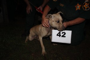 The Polk County Sheriff's Office sent out photos of the dogs found during the breakup of a dog fighting ring.