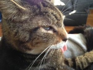 Freeline Media editor pays tribute to his late friend, the feline Crabby Tabby.