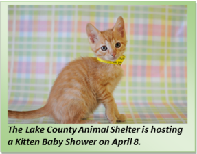Kitten Baby Shower in Lake County