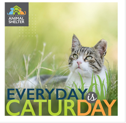 Caturday in Lake County