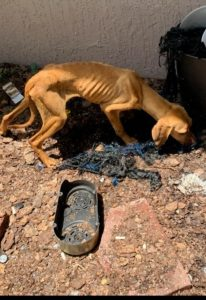 Bartow animal cruelty